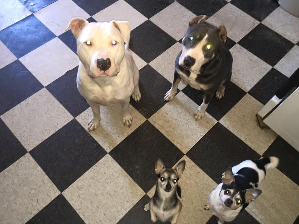 Kodah, Freya, Gremlin, and Keyoshi