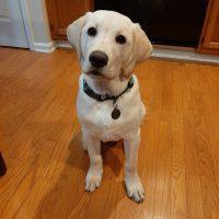 Charlie - puppy program